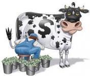 cash cow.jpg